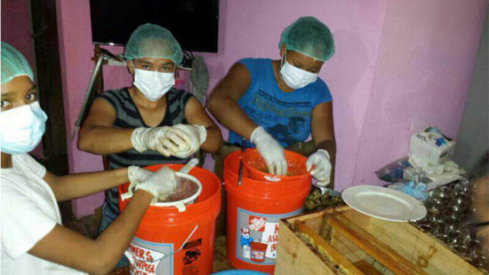 honey-production-corozal-01