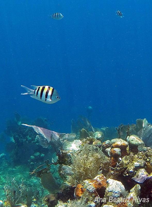 fishies_1_AnaB_Utila,Honduras