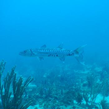 Barracuda en Monitoreo ECOME 8