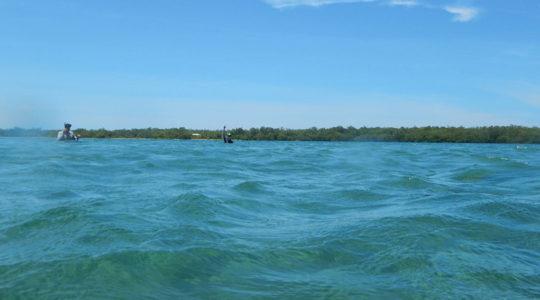 Verdes y sorprendentes paisajes bajo el agua