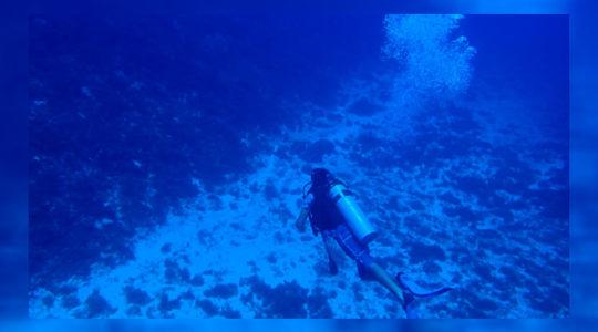 Realizan, por primera vez, caracterización de sitios de agregaciones de desove en el Norte de Quintana Roo