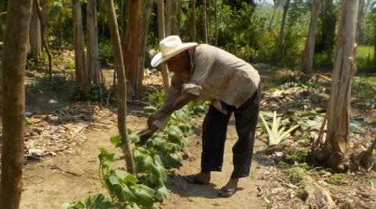 Cambio climático: ¿adaptarse o sucumbir? Casos exitosos de algunas comunidades del Caribe guatemalteco