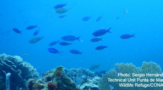 Ecological connectivity is key to the life cycle of the species that inhabit the Mesoamerican Reef