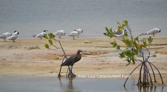 El bienestar de los ecosistemas insulares requiere el manejo de las especies exóticas invasoras