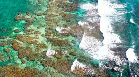 La práctica del turismo sustentable prospera en el Arrecife Mesoamericano