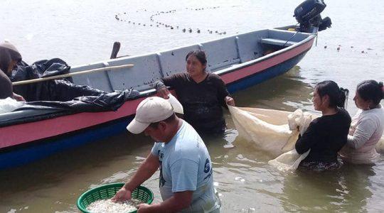 Pescadores de manjúa y camarón en el Caribe de Guatemala urgen apoyo para mejorar su situación de vida actual