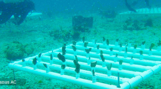 Iniciativa Mesoamericana de Rescate de Arrecifes