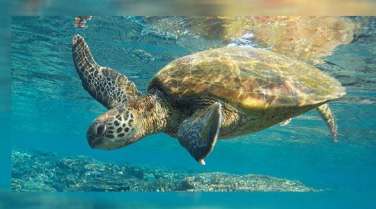 Protejamos a los migratorios centinelas del planeta