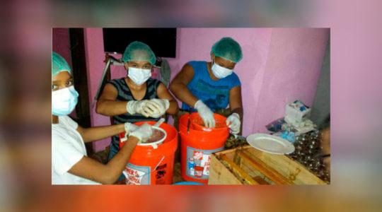 Victorias en Honduras – Producción de Miel en Sandy Bay West End