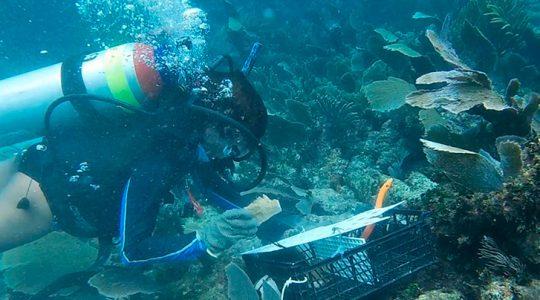 Activan en México Fondo de Emergencia para la atención de corales dañados por tormentas y huracanes