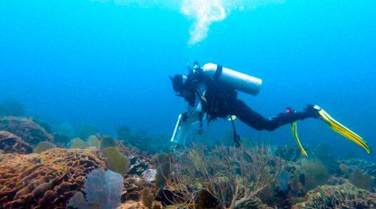 La ciencia ayuda a documentar una nueva joya marina del Sistema Arrecifal Mesoamericano