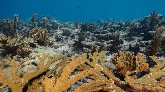 Innovative post-hurricane protection for endangered Mesoamerican Coral Reef goes live with insurance carrier confirmed